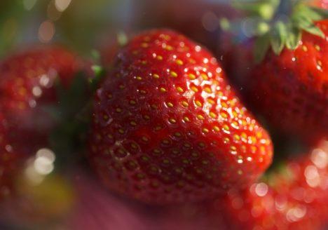 Erdbeere Rot