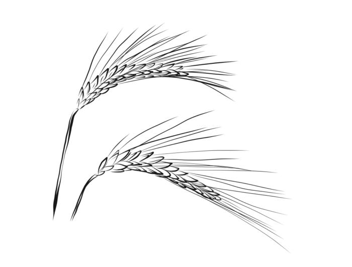 Getreide-Grafik-kreani